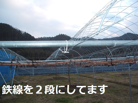DSCF2668