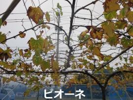 IMG_4279